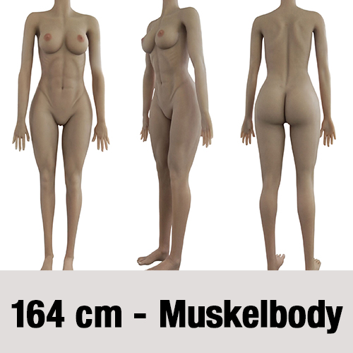 Muskelbody